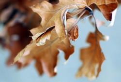 Autumn (2207)