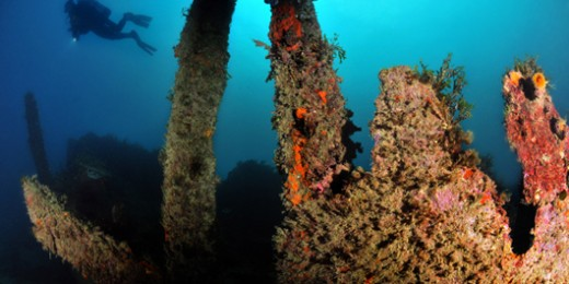 Maori Wreck - Malta (9551)